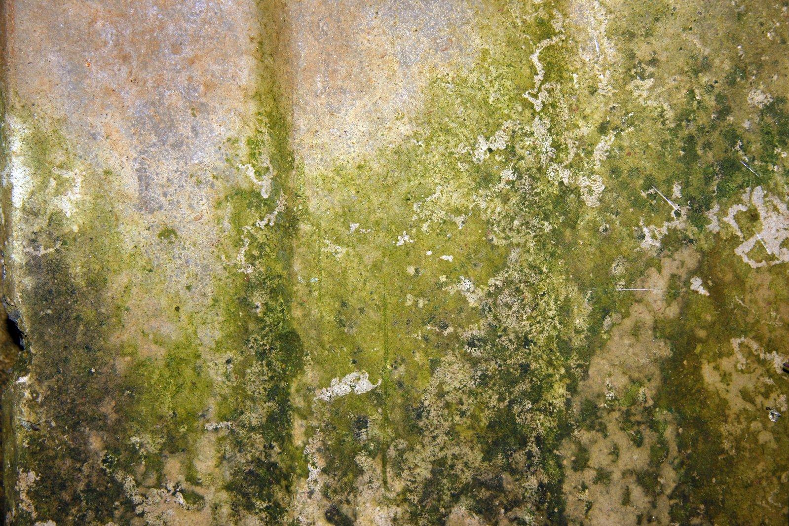 зеленая плесень