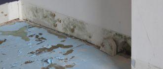 как убрать плесень со стен в квартире